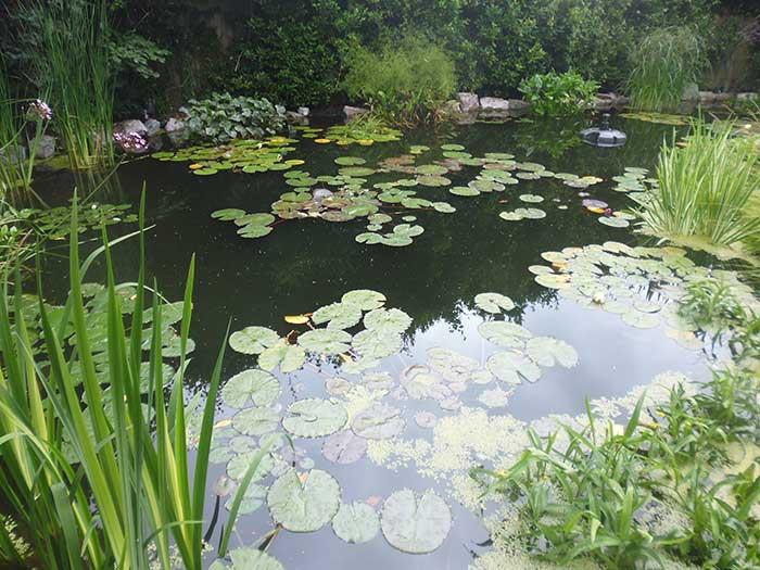 Pond refurbishment Surrey