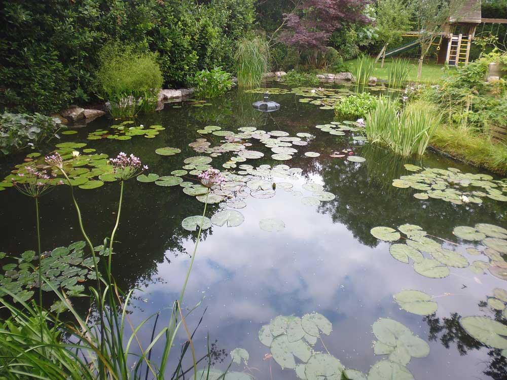 Aquatic Plants Surrey