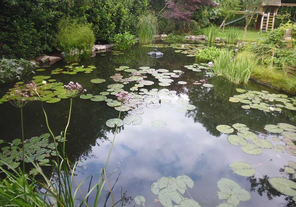 Aquatic Plants Surrey