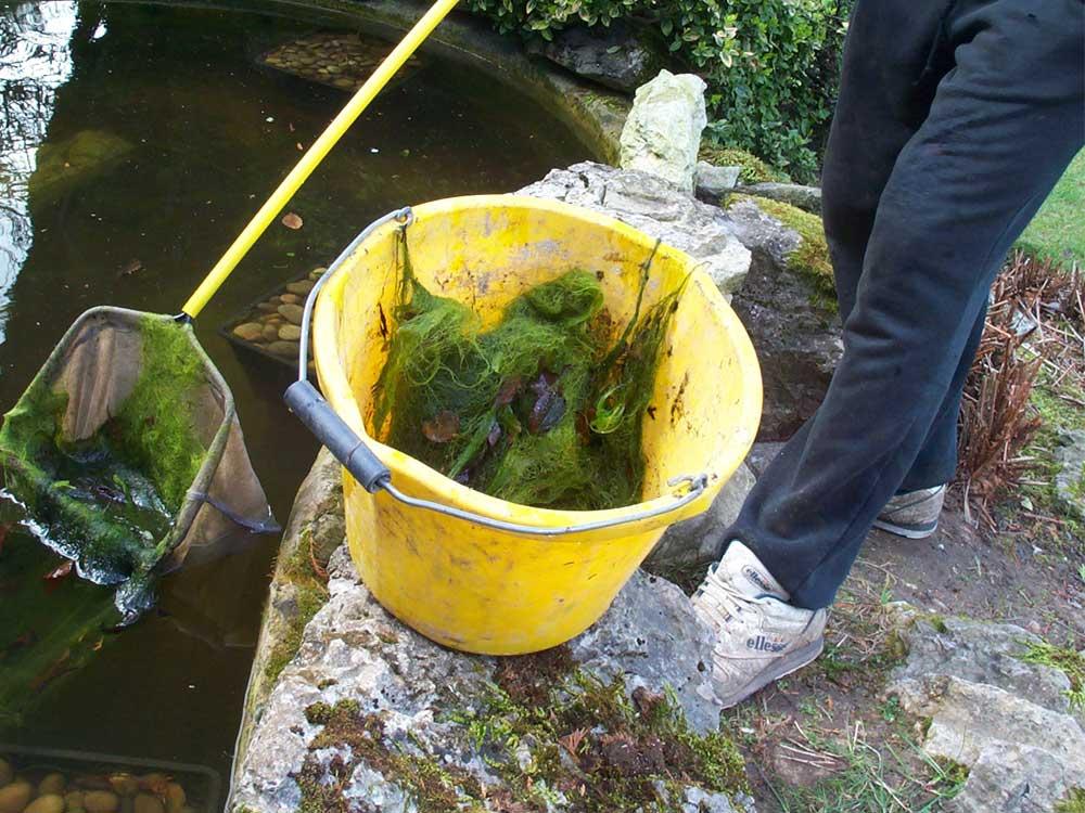 Blanket weed removal Surrey